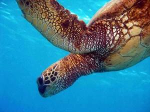 madagascar-tartaruga__n