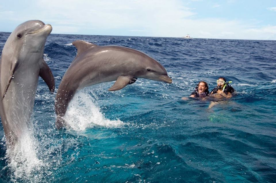 padi-salto di delfini